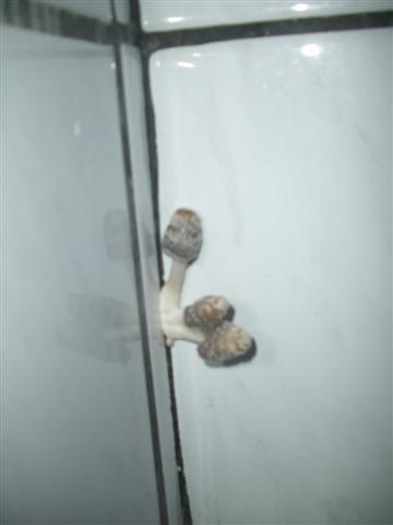 Pilz Im Badezimmer re: mysteriöser pilz im badezimmer *pic*